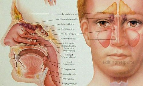 Signs-Symptoms-Sinus-Infection